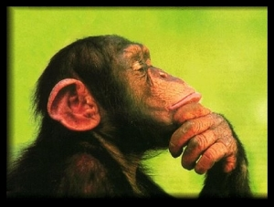 Thinking_Chimp