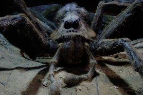 Spider19