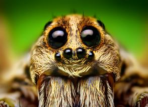 Spider7