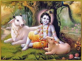 Lord-Krishna-In-a-Forest-With-Cow-Natural-Image